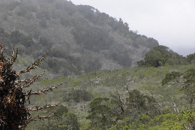 Parque Nacional Bosque de Fray Jorge