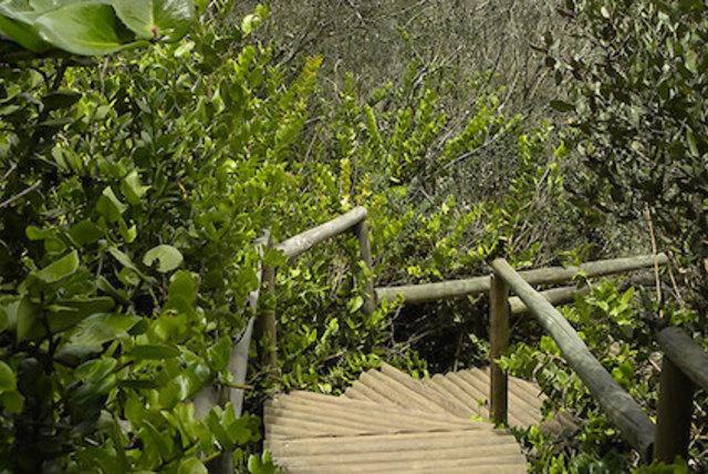 Circuito Interpretativo del Bosque Hidrófilo