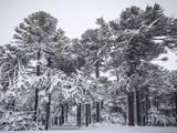portada1_nieve.jpg