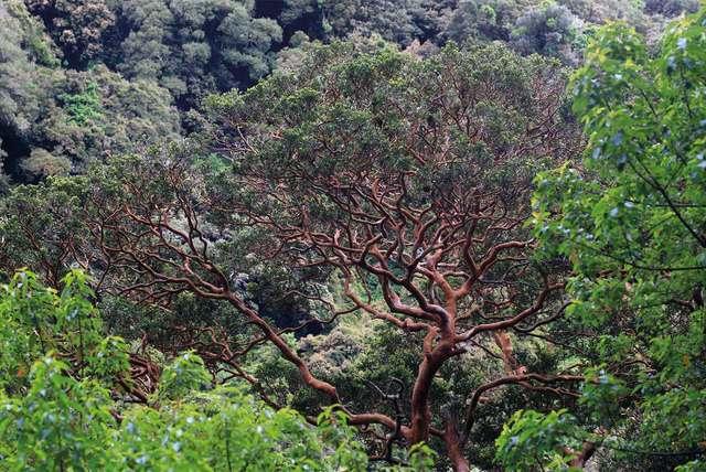 Reserva Nacional Isla Mocha