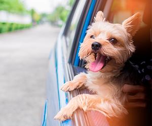 Consejos para transportar mascotas