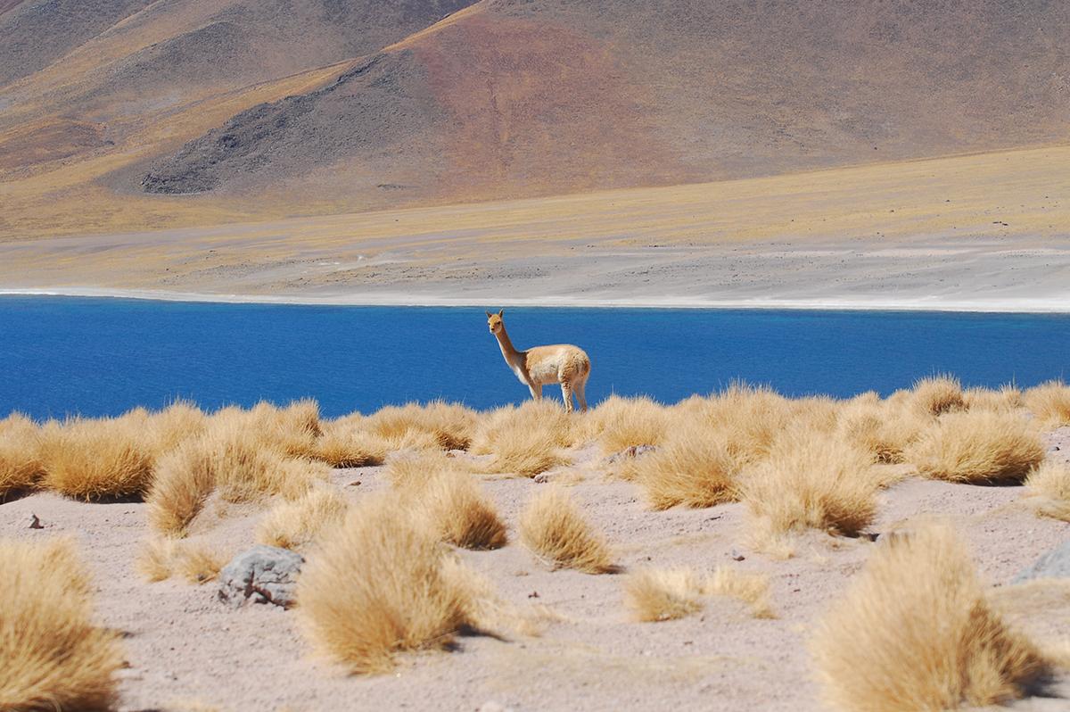 Chile: Mejor destino de Turismo Aventura en Sudamérica 2017