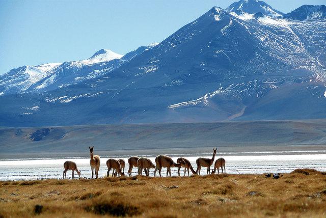 Tramo Sendero de Chile, Laguna del Negro Francisco
