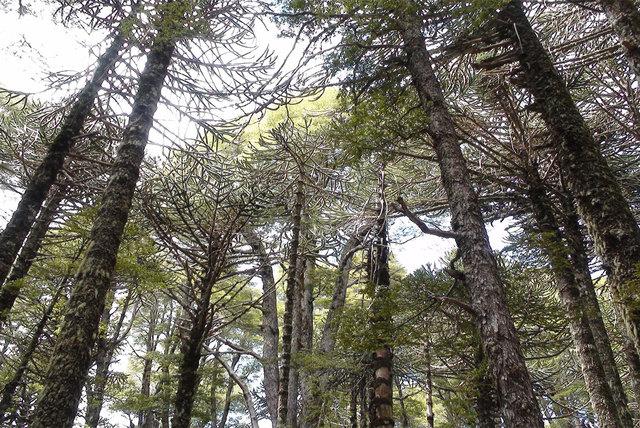 Parque Nacional Conguillío