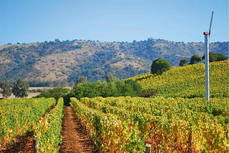 Las rutas del vino en la zona central