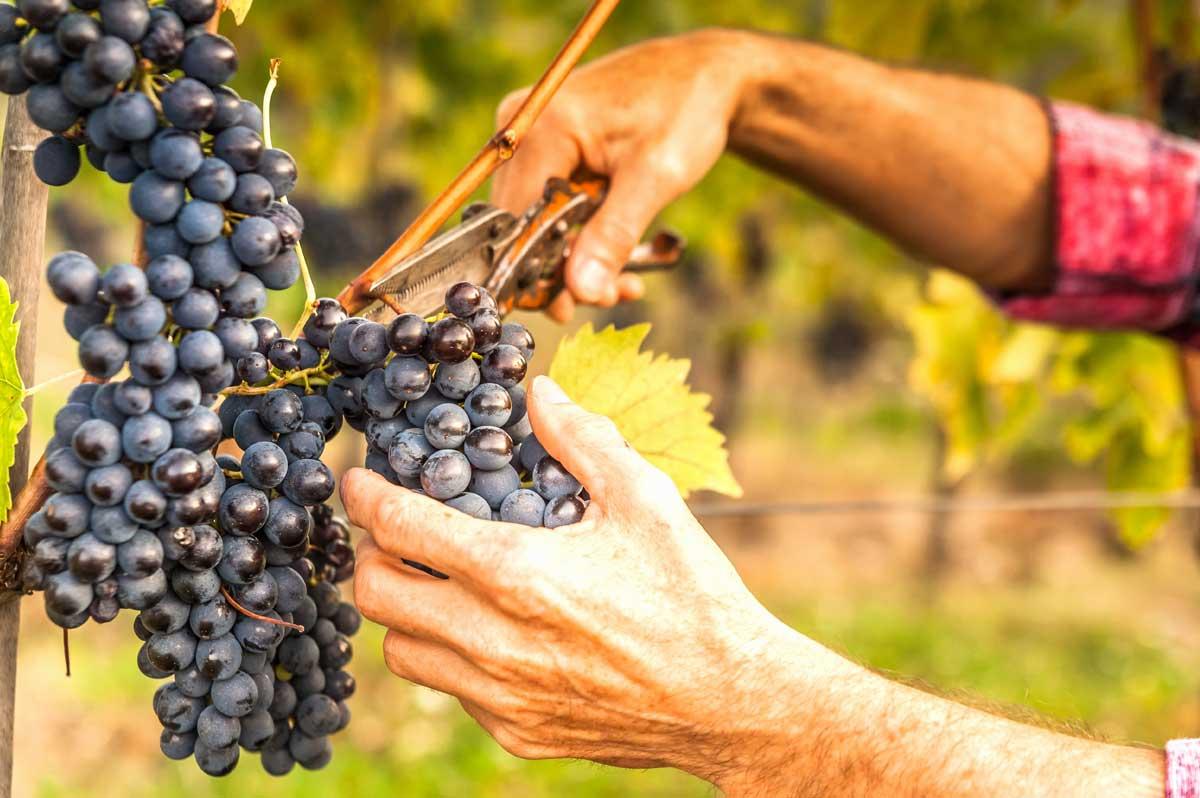 Descubre la magia del vino en el Valle del Maipo