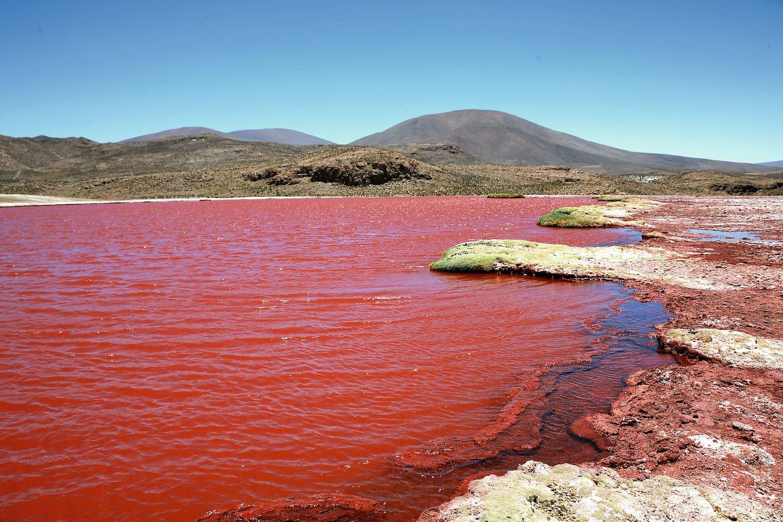 Lagunas Roja, comuna de Camarones
